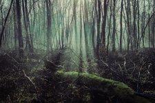 Porte dans les bois-3.jpg