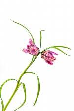 La fleur.jpg